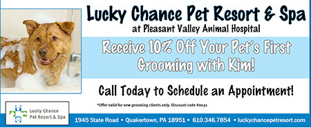 Special offer for grooming services
